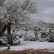 Desert Snow Poster