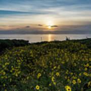 Desert Sunflowers Coastal Sunset 2 Poster
