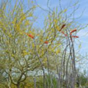 Desert Trees Poster