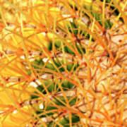 Desert Web Poster