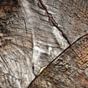 Detail Of Old Wood Sawn Poster
