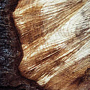 Detail Of Sawing Wood With Bark Poster