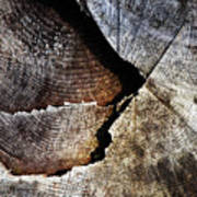 Detail Old Sawn Stump Poster