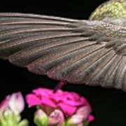 Details Of The Hummingbird Wing Poster