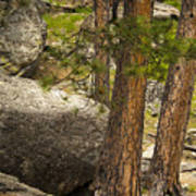 Devils Tower Trees Poster