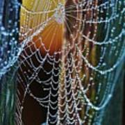 Dew Covered Web Poster