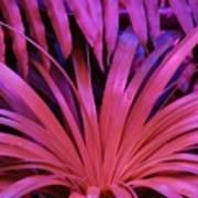 Dew Drop Pink Poster