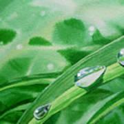 Dew Drops Poster by Irina Sztukowski