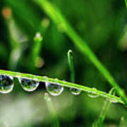 Dew Drops On Blade Of Grass Poster