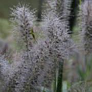 Dew Drops - Plant Poster