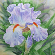 Dew On Light Blue Iris. Poster