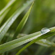 Dewy Drop On The Grass Poster