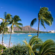 Diamond Head And Palm Trees Poster