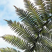 Dicksonia Frond Poster
