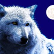 Digital Art Wolf Poster Poster