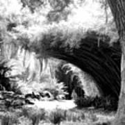 Digital Paint Black White Landscape Louisiana  Poster