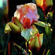 Digital Painting Vibrant Iris 6764 Dp_2 Poster