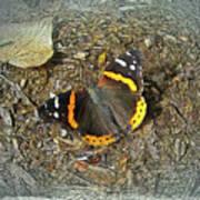 Digital Red Admiral Butterfly - Vanessa Atalanta Poster