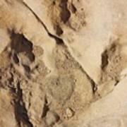 Dino Tracks In The Desert 2 Poster