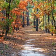 Autumn Scene Dirt Road Poster