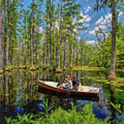 Discovery In A Cypress Swamp Poster