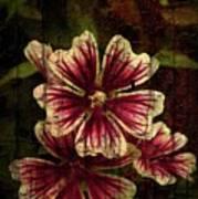 Distinctive Blossoms Poster