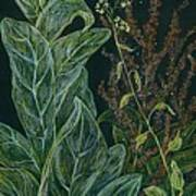 Ditchweed Fairy Mullein Poster