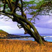 Dixie Maru Cove Poster