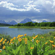 Dm9235 Mt. Moran From Oxbow Bend Poster