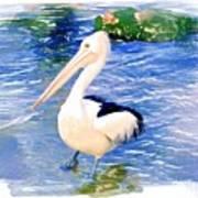 Do-00088 Pelican Poster
