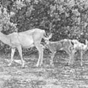 Doe With Twins Pencil Rendering Poster