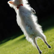 Dog - Jumping Poster