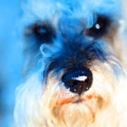 Dog 2 . Photo Artwork Poster