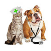 Dog And Cat Veterinarian And Nurse Poster