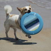 Dog Beach Bliss Poster