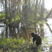 Dog Exploring Mississippi River Bank Poster