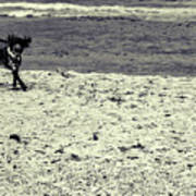 Dog Frolicking On A Beach Poster