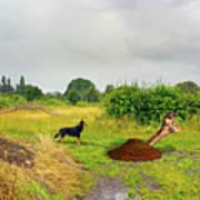 Dog Heaven - Abbie's Edit Challenge 3 Poster