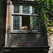 Dog In A Window Above The Canal In Bruges Belgium Poster