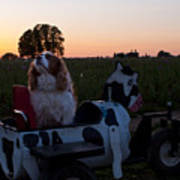 Dog In Cow Wagon  Poster