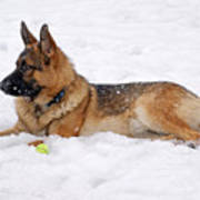 Dog In Snow Poster by Sandy Keeton