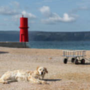 Dog Lying On The Beach In Front Of Red Lighthouse Of Cres Poster
