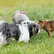 Dog Meeting  Poster