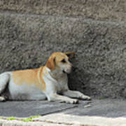 Dog Next To A Wall Poster