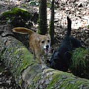 Dog On A Log Poster