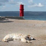 Dog Sleeping On The Beach In Front Of Red Lighthouse Of Cres Poster