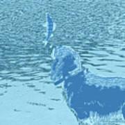Dog Vs Perch 2 Poster