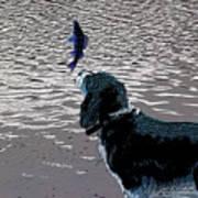 Dog Vs Perch 3 Poster