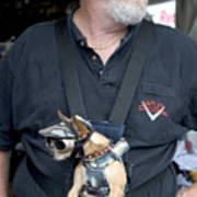 Doggie Biker Poster