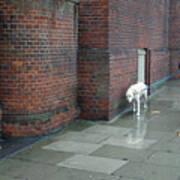 Doggie  Strolling 2 Poster